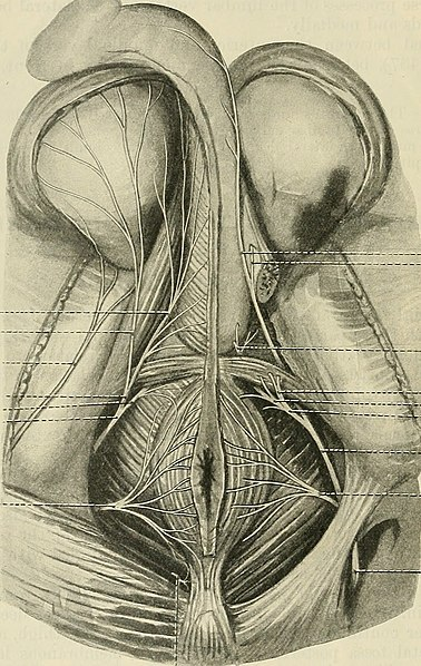 File:Cunningham's Text-book of anatomy (1914) (20790037276).jpg - Wikimedia Commons