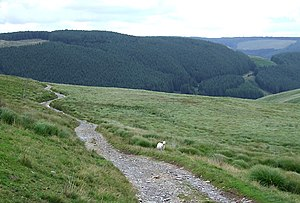 English: Drovers' Road, and Forestry on Bryn M...