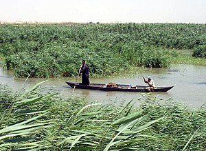 Marsh Arabs poling a traditional mashoof in th...