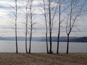 Trees on Gyro Beach, Kelowna, Okanagan Lake, BC.