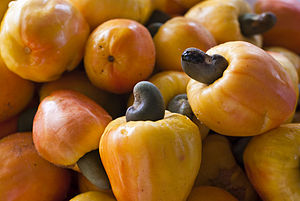 Cashew fruits and nuts.