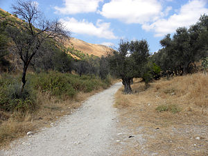 Old road from Rosh Pina to Safed in the Galile...