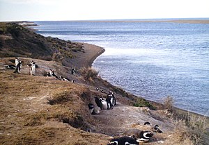 Pingüinera frente a la caleta Valdés en la pen...