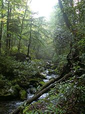 They're also a home for many species, from trees and flowers, to birds and butterflies, wolves and bears. Temperate Rainforest Wikipedia