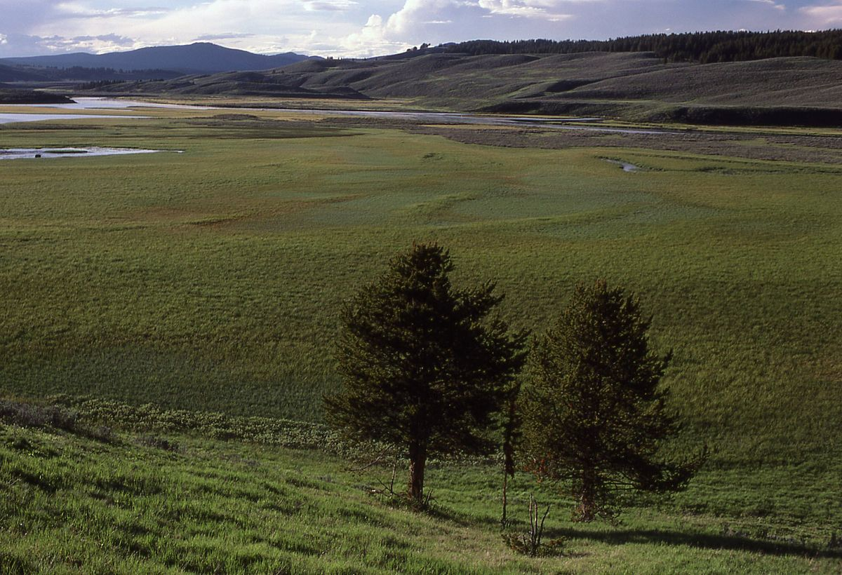 Hayden Valley  Wikipedia