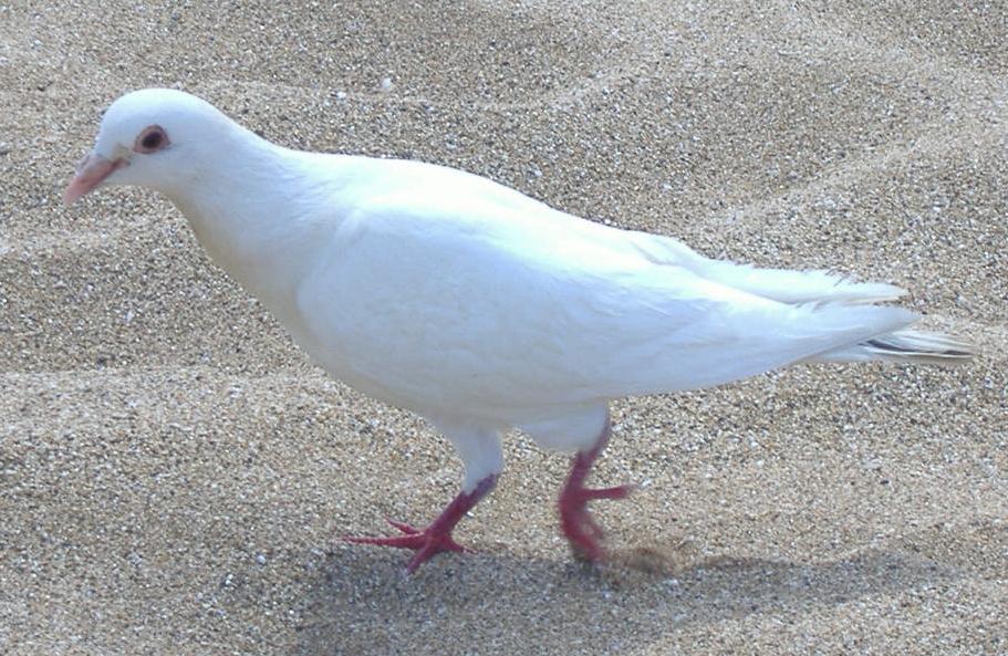 White release dove.