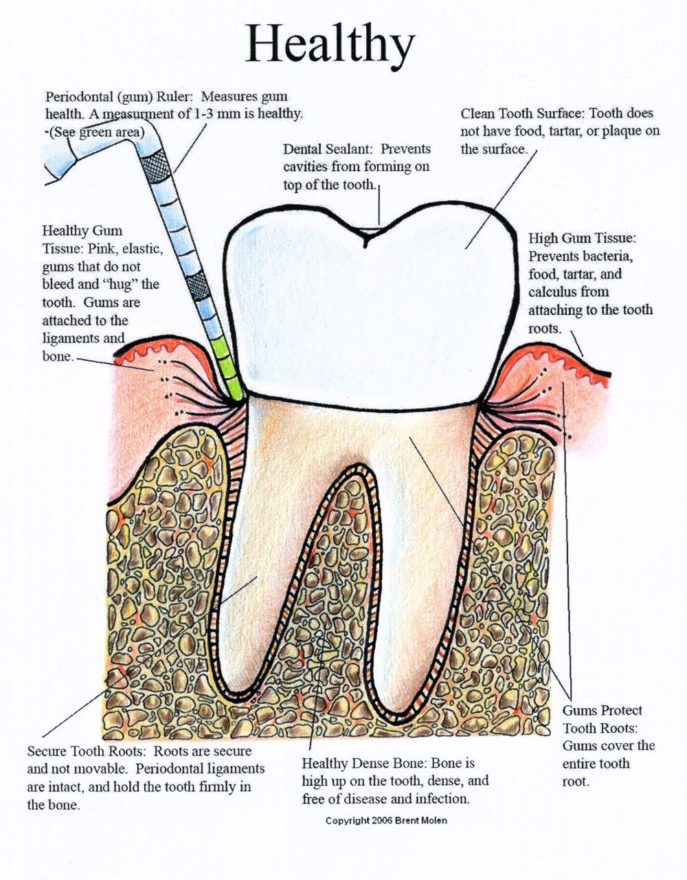 medium resolution of dental diagram pdf