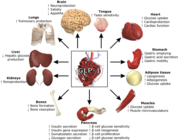 GLP-1 related to IBS symptoms?