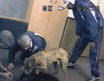 Dog fighting gang members caught on hidden surveillance camera  Girl Pitbull Dog Names