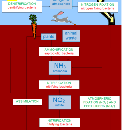 file simple and complete nitrogen cycle diagram png [ 794 x 1118 Pixel ]