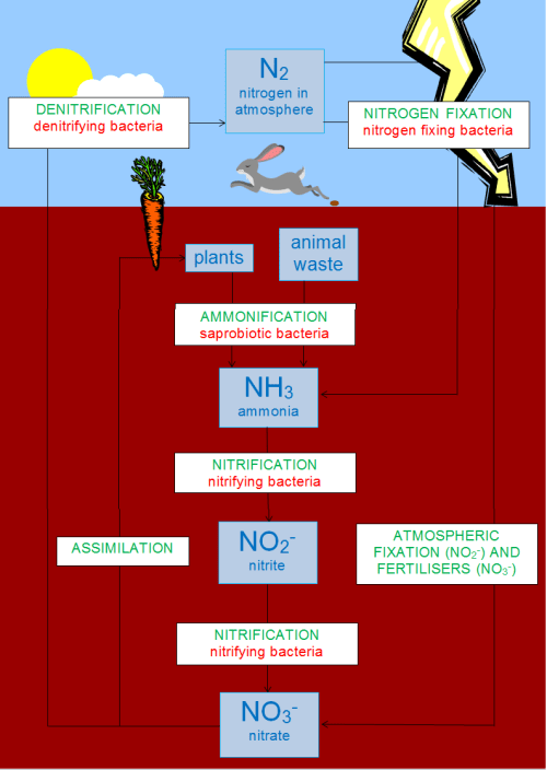 small resolution of file simple and complete nitrogen cycle diagram png