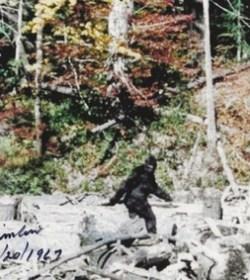 Patterson–Gimlin film frame 352.jpg