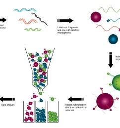 overview of the suspension array technology procedures using dna hybridization as a model  [ 5333 x 3333 Pixel ]