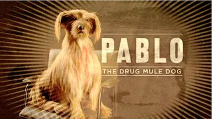 Pablo the Drug Mule Dog  Wikipedia