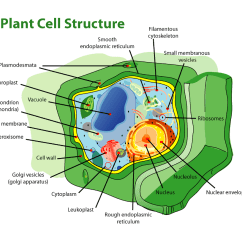 Plant Cell Diagram Labeled And Definitions Goodman Central Air Conditioner Wiring Structure Biology I