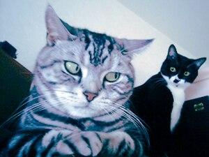 Nervous Cats