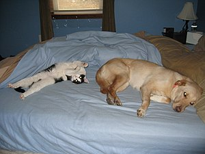My dog and cat hanging out on the bed; picture...