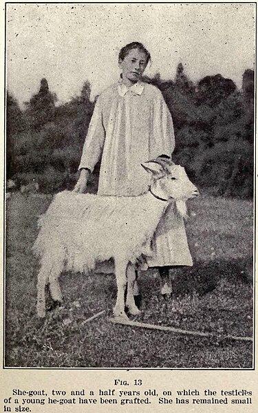 File:Voronoff She Goat.JPG