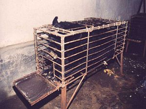 "A bile bear in a ""crush cage"" on Hui..."