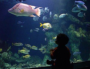 A fish tank at the Oklahoma Aquarium
