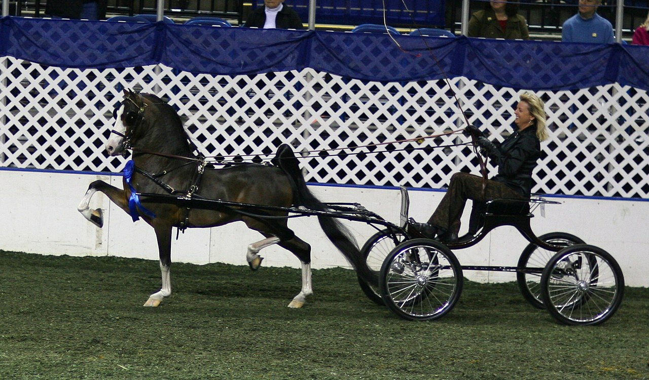 hight resolution of file the remington hackney harness pony jpg