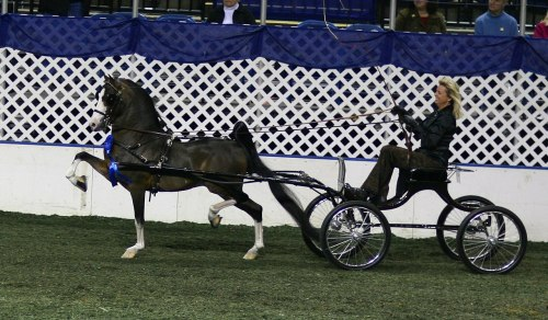 small resolution of file the remington hackney harness pony jpg