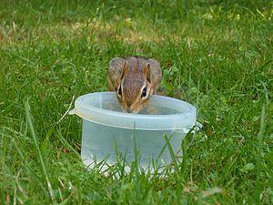 Please, drink water (again!)