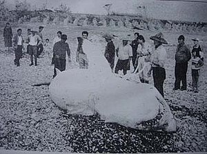 Great white shark caught off Hualien County, T...