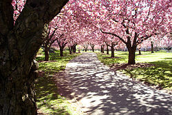 Where are the world's best botanical gardens, the ones that should be on the bucket list of everyone who loves plants? Brooklyn Botanic Garden Wikipedia