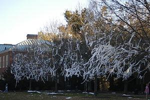 Toilet-paper-trees