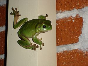 Frog example