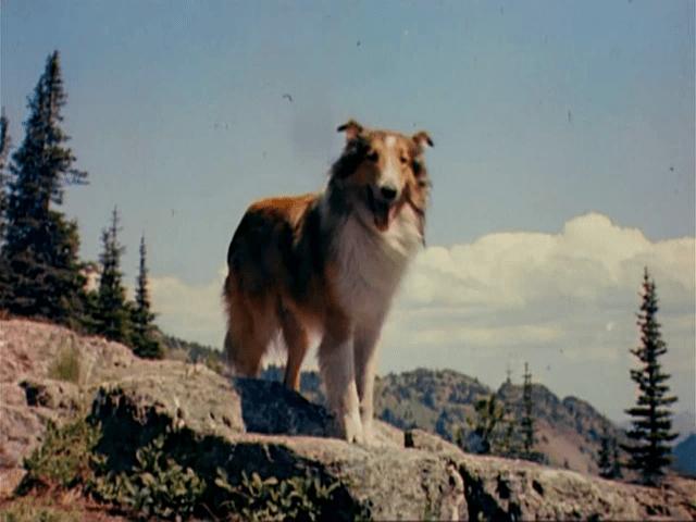 Torna a casa Lassie  Wikipedia