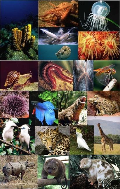 Hewan Yang Hidup Di Air Disebut : hewan, hidup, disebut, Kewan, Wikipedia