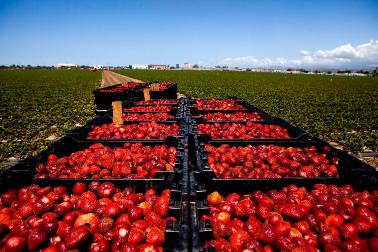 strawberries-0001