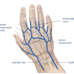 Hand Nerves Diagram Pollak 12 705 Wiring Wrist Anatomy Veins Of The And