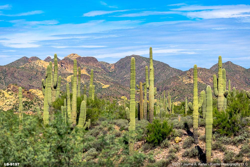 desert landscape art gallery