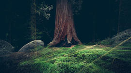 Experience The Trippy Life Of An Ancient Redwood