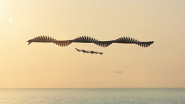 Amazing Chronophotographs Capture the Patterns of Birds in Flight