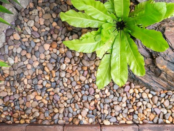 beautify garden with stones