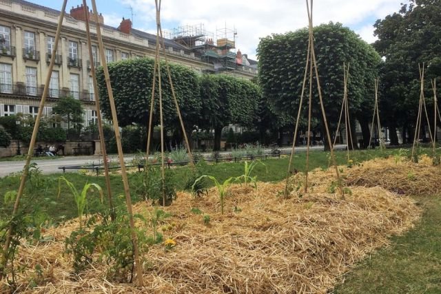 potager cours cambronne