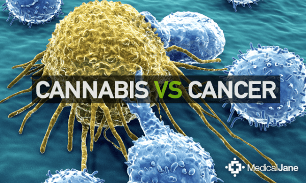 Studies Show Cannabis Targeting Killing Cancer Cells