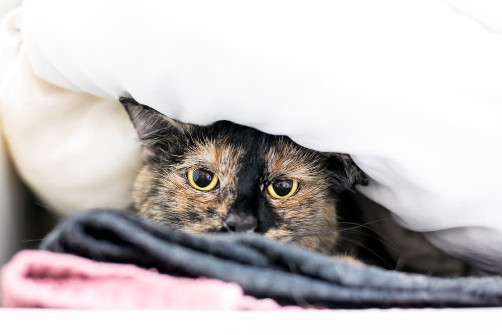 stressed out cat hiding