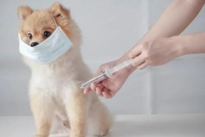 Petz promove vacinação contra raiva em domicílio durante o mês de agosto
