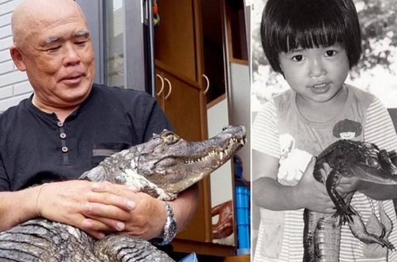 Crocodilo com idoso