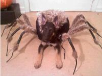 Spider-Dog, Spider-Dog - Neatorama