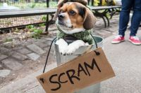 New Yorks Halloween Dog Parade - Neatorama