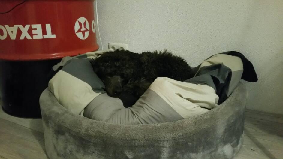 Het HondenForum  Bekijk onderwerp  Hondenmanden stress