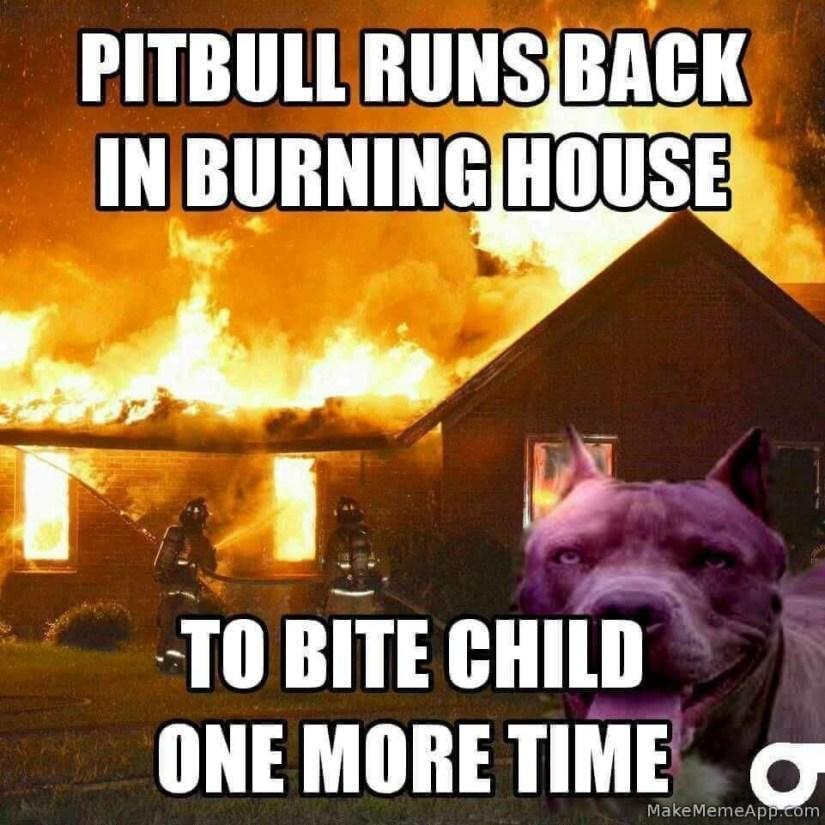 Image result for burning pitbull