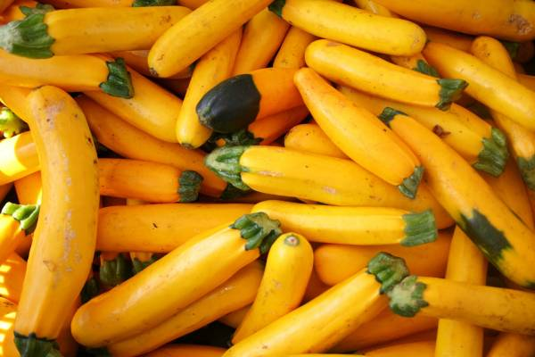 Essex County Residents Can Apply for County Farmers Market
