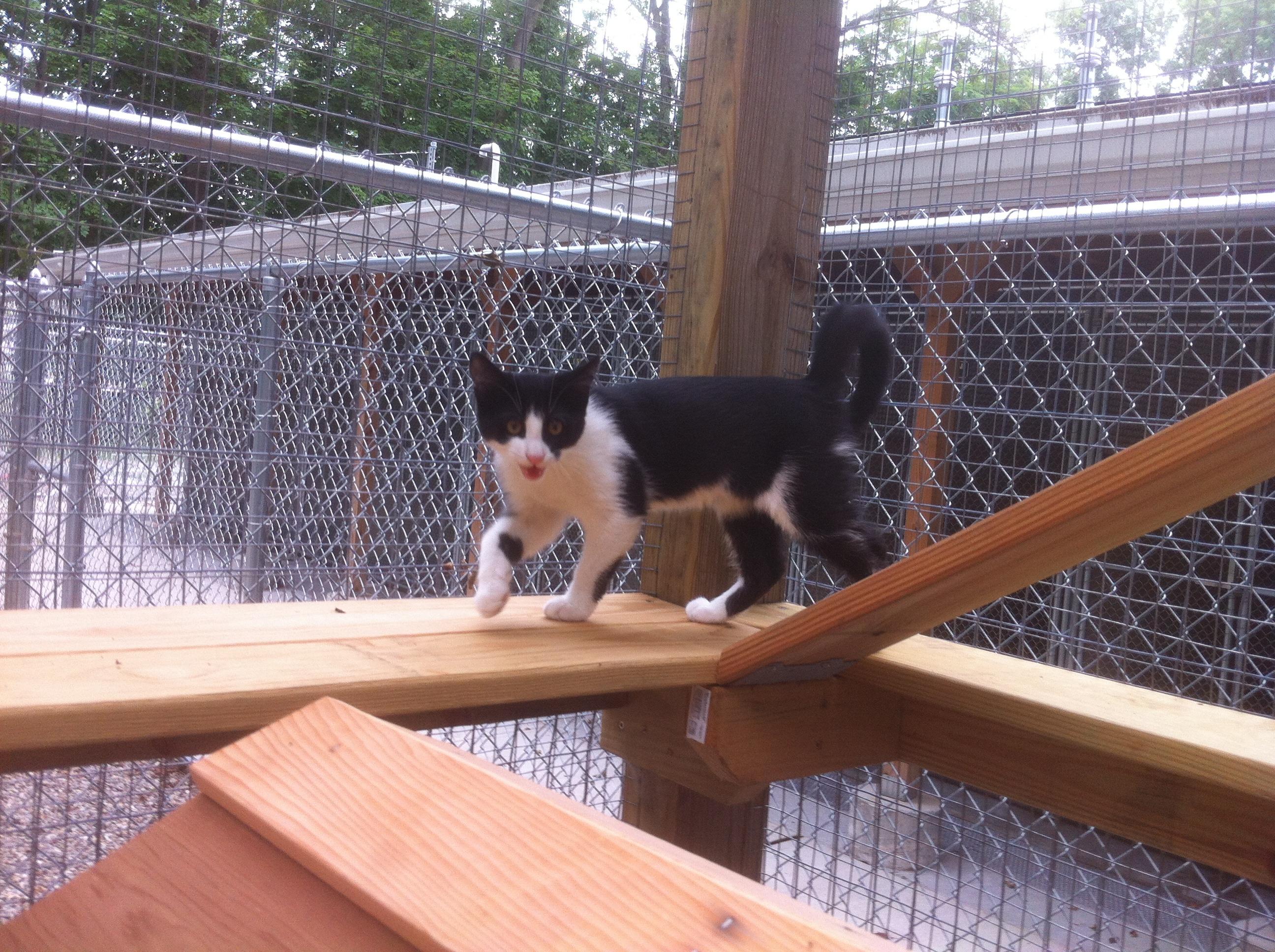 Montville Animal Shelter